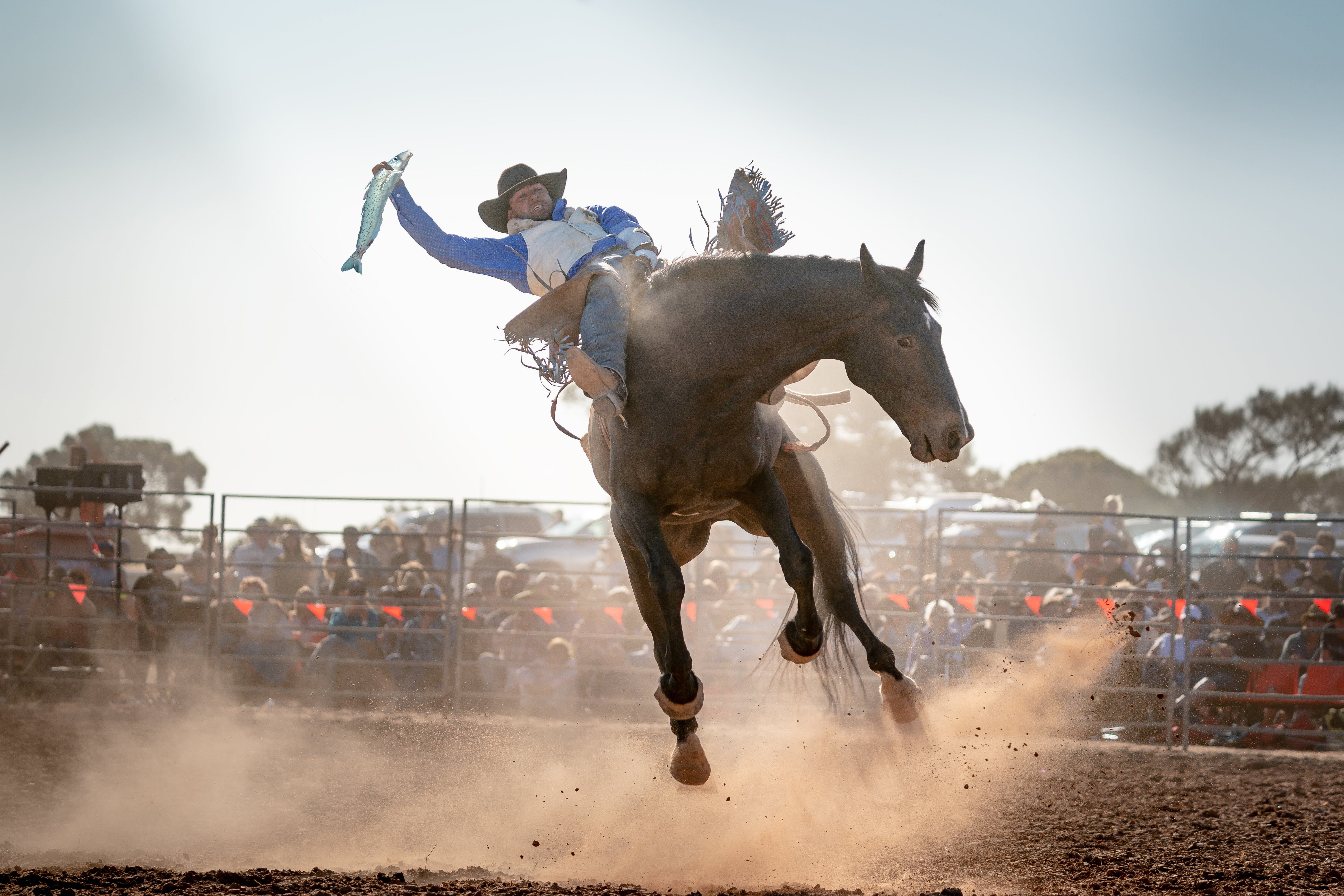 Rodeo by the Sea - Streaky Bay - Tourism Adelaide